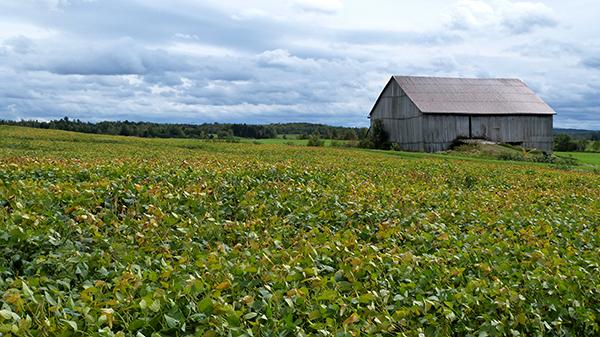 Paysages agricoles de la région de Chaudière-Appalaches - Québec