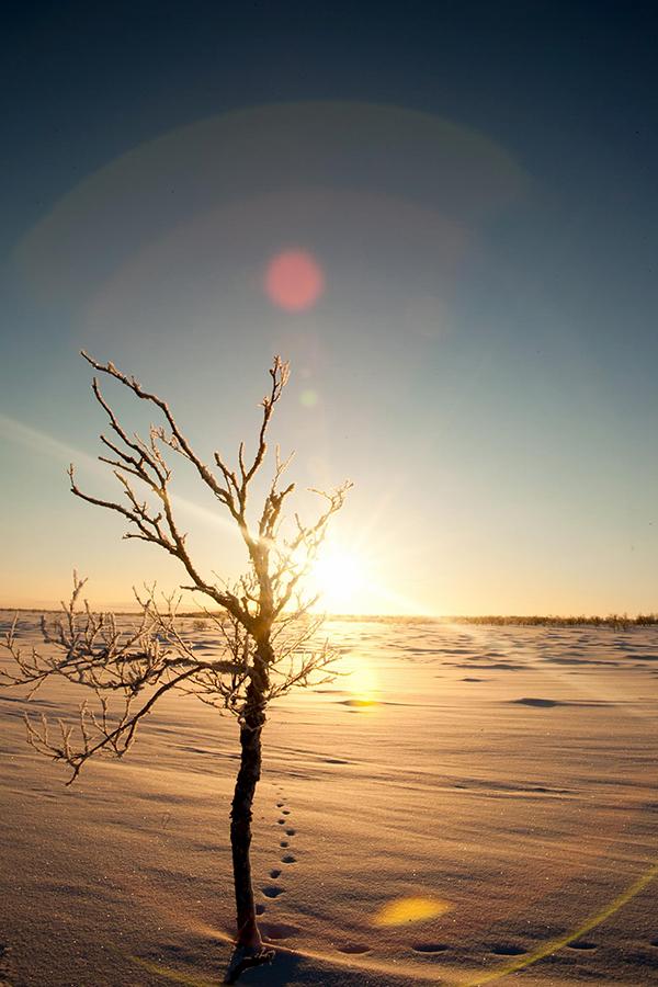 Sous le soleil de l'Arctique