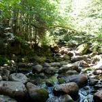 Le charme des sous bois dans le parc naturel de la Jacques Cartier - Québec