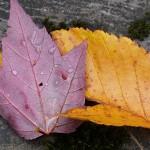Feuilles d'automne dans le parc de la chute Sainte-Agathe - Québec