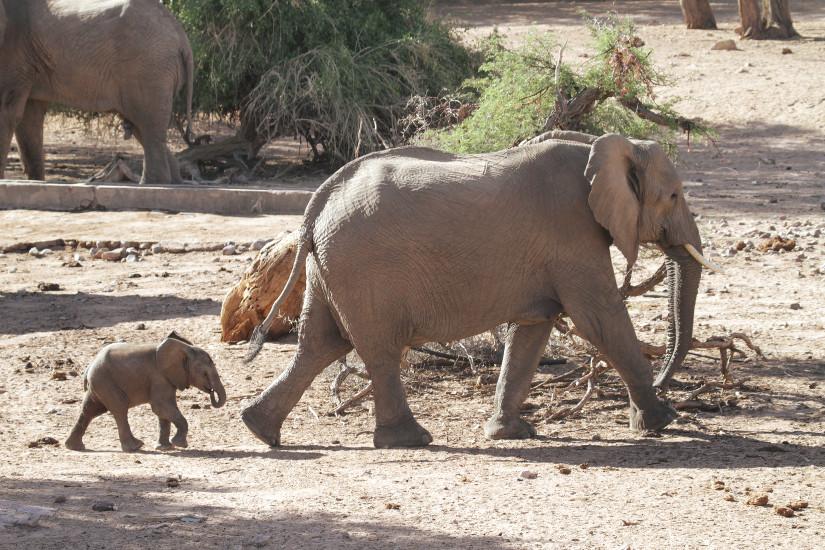 Elephants Namibie - Blog Bar a Voyages