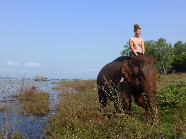 elephant-WhyNotTDM-blog-bar-a-voyages